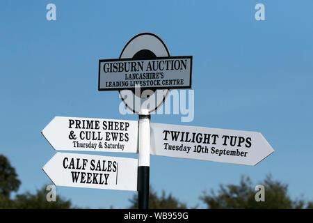 Gisburn Auktion, Viehzucht Zentrum Tier Vertrieb, Großbritannien - Stockfoto