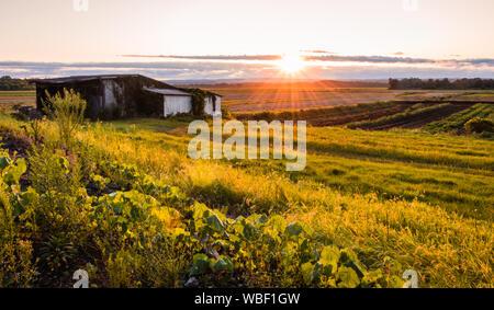 Warme Sommer Sonnenuntergang über einem bescheidenen Farm, und die Slums in den schwarzen Schmutz Region von Pine Island, New York