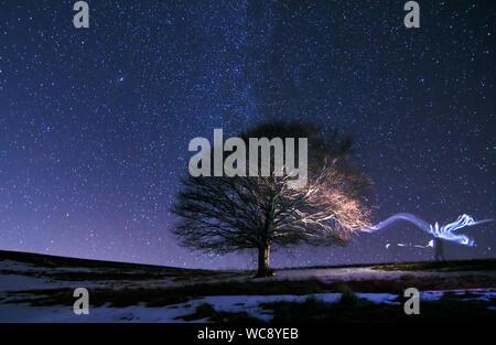 Malerischer Blick auf Baum unter Sternenhimmel - Stockfoto