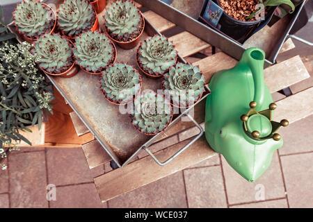 Gruppe der Sukkulenten, Kakteen in Töpfen auf hölzernen Tisch Hintergrund. - Stockfoto