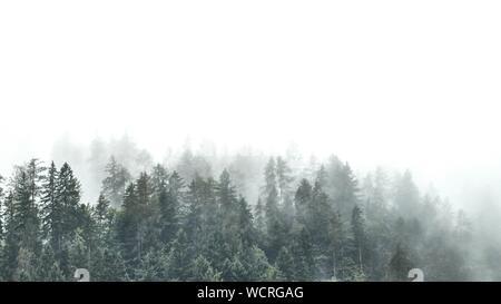Bäume im Wald gegen Himmel - Stockfoto
