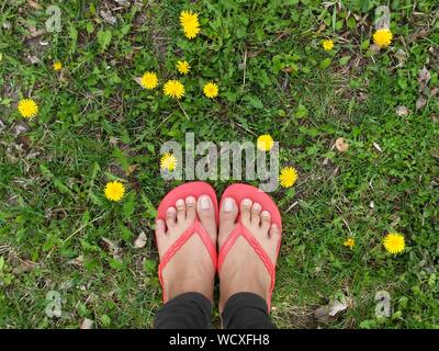 Untere Partie der Frau, die durch die gelben Blumen auf dem Feld - Stockfoto