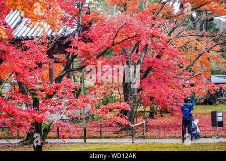 Ansicht der Rückseite des Mann mit Rucksack im Park von Bäumen im Herbst - Stockfoto