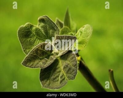 Heuschrecke auf Blume - Stockfoto