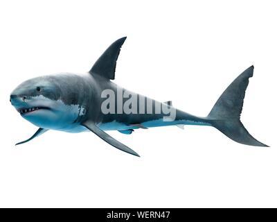 Great White Shark, Abbildung - Stockfoto