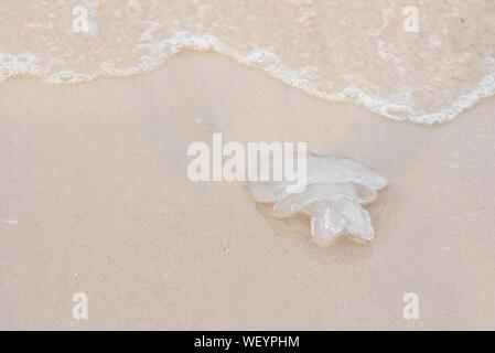 Die Quallen am Strand. Thailand - Stockfoto