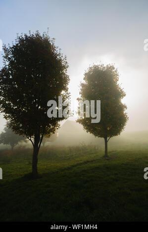 Sonnenlicht streifen durch die nebligen Bäume auf einem Herbstmorgen, Stowe, Vermont, USA - Stockfoto
