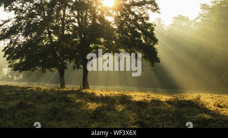 Bäume auf Feld bei nebligen Wetter - Stockfoto
