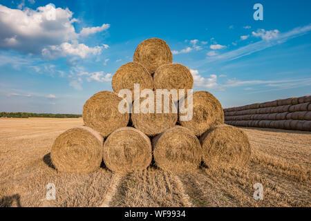 Riesige Haufen Stroh Heu Ballen auf Rollen unter geerntet. Vieh Betten - Stockfoto