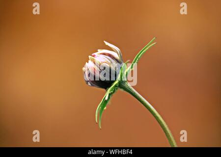 Nahaufnahme der Heuschrecke auf Blume - Stockfoto