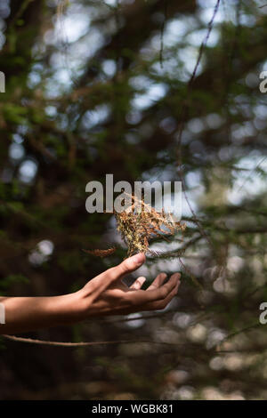 Nahaufnahme der menschlichen Hand Blätter Fangen - Stockfoto