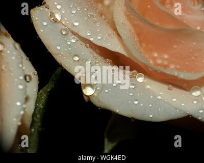 In der Nähe von nassen Blume - Stockfoto