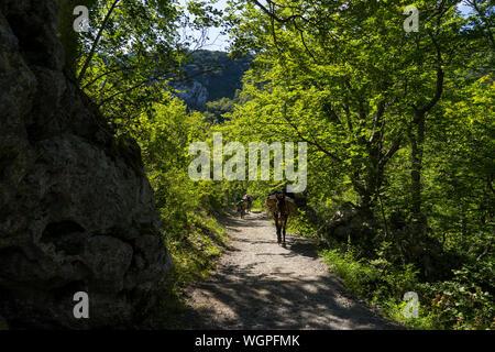 Starigrad Paklenica, Sibenik/Kroatien - 17. 08. 2019, schönen sonnigen Tag im Velebit Gebirge, Leute und Pferde und Esel. - Stockfoto