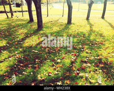 Bäume und Pflanzen auf dem Feld im Herbst - Stockfoto