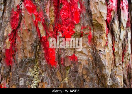 Baum mit Blut auf der Rinde. Die entwaldung Konzept Bild - Stockfoto
