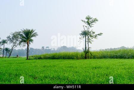 Grüne Felder und Bäume in einer reizvollen Kulturlandschaft im ländlichen Bengalen im Nordosten Indiens. Eine typische Landschaft mit einem landwirtschaftlichen Feld in t - Stockfoto