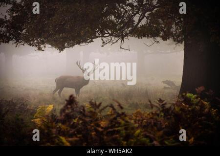 Reh stehend auf dem Feld im Wald - Stockfoto