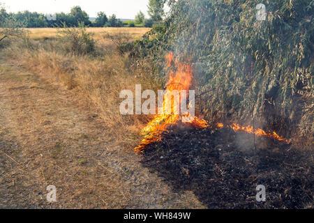 Wald wildfire. Verbrennen von trockenem Gras und Bäumen. Starker Rauch gegen den blauen Himmel. Wildes Feuer durch heiße windige Wetter im Sommer - Stockfoto