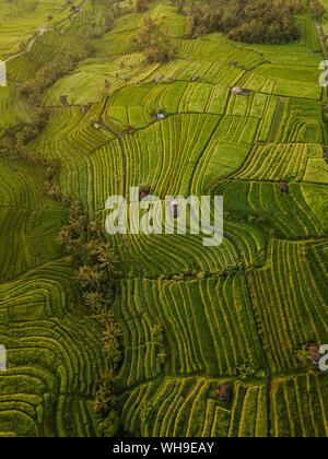 Luftaufnahme von Jatiluwih Reis Terrassen, Tabanan, Bali, Indonesien, Südostasien, Asien