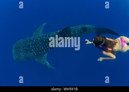 Touristische schnorcheln Mit dem Walhai (Firma IPCON typus) in der Honda Bay, Palawan, Philippinen, Südostasien, Asien - Stockfoto
