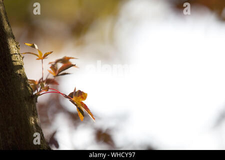 Close-up Herbst Baum - Stockfoto