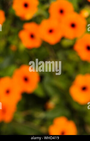 Defokussierten Bild von Orange Blumen - Stockfoto