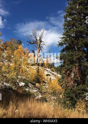 Bäume wachsen auf Feld im Herbst - Stockfoto