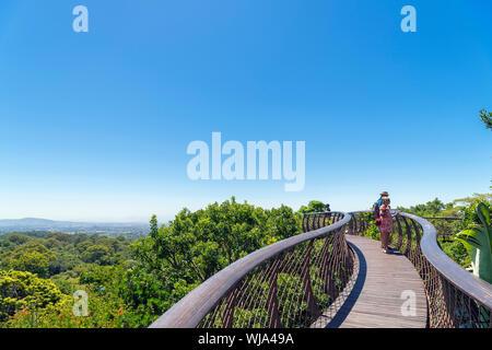 "Die ""boomslang"" 100 Baum Canopy Walkway, Kirstenbosch National Botanical Garden, Cape Town, Western Cape, Südafrika - Stockfoto"