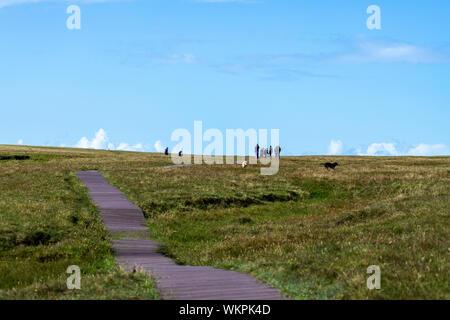 Gruppe der Touristen mit Hunden auf lose in Unst Hermaness National Nature Reserve, Haroldswick, Shetland, Scotlnad, Vereinigtes Königreich - Stockfoto