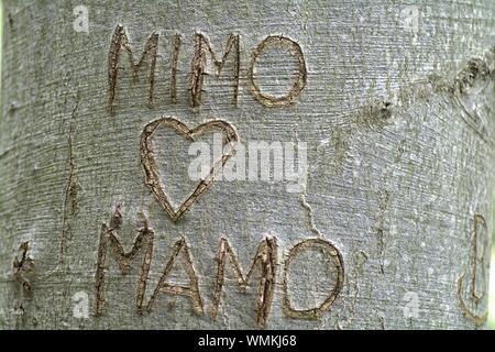 Text auf Baumstamm geschnitzt - Stockfoto