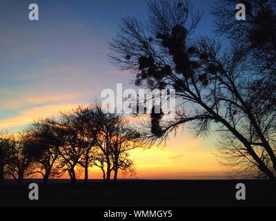 Silhouette Bäume auf Feld während des Sonnenuntergangs - Stockfoto