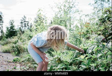 Junge Mädchen Kommissionierung Obst von wilden Büschen im Garten