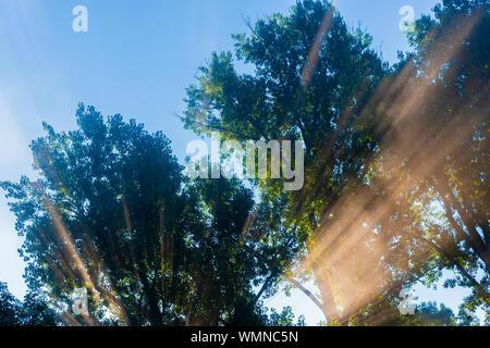 Goldenes Sonnenlicht Filterung durch Bäume, stowe Vermont, USA - Stockfoto