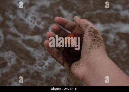 7/8 Hand trocken Rose über Ufer am Strand - Stockfoto