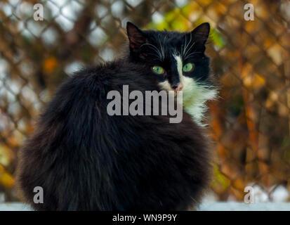 In der Nähe von Black Cat - Stockfoto