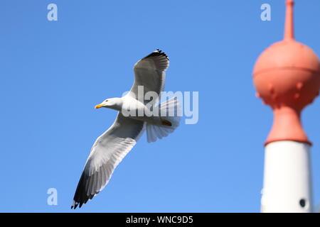 Niedrigen Winkel Ansicht der Vogel fliegt gegen blauen Himmel
