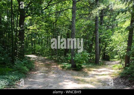 Horizontale Foto von einem Pfad, Gabeln in den Wäldern. Welchen Weg nehmen Sie?
