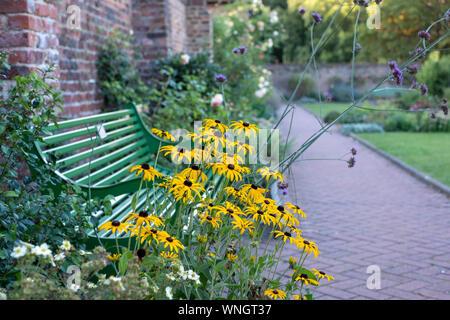 Gelbe rudbeckien Blumen vor der grünen Garten Bank in Eastcote House Historic walled garden in Hillingdon, London, UK - Stockfoto