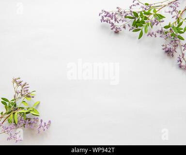 Blumen Komposition. Rahmen aus getrockneten Blumen auf weißem Hintergrund. Flach, Ansicht von oben - Stockfoto