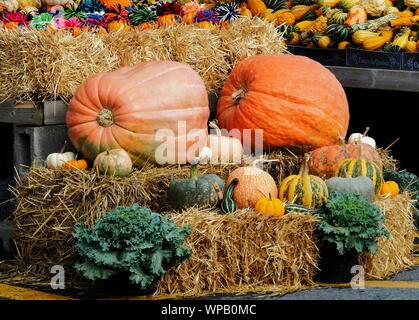 Verschiedene Sorten von Kürbis, Zucchini und Kürbisse auf Stroh Strohballen mit gemalten Miniatur Jack-o-lanterns und Kale - Stockfoto