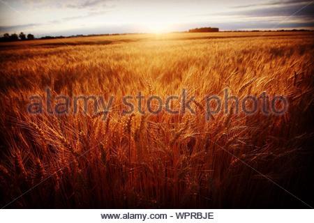 Sonnenuntergang über Feld - Stockfoto