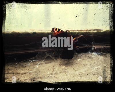 Nahaufnahme der Schmetterlinge in der Nähe der Fenster zu Hause - Stockfoto