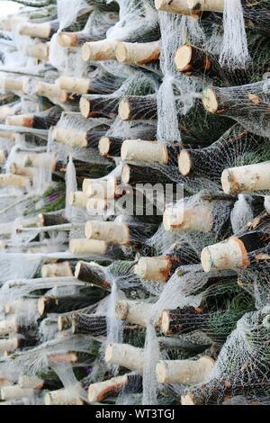 Weihnachtsbaum aus Weinflaschen - Stockfoto