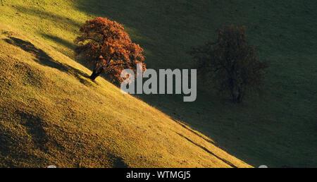 Blick auf die Bäume auf dem Feld im Herbst - Stockfoto