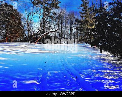 Bäume auf schneebedeckten Feld im Winter - Stockfoto