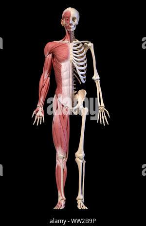 Menschliche Körper, 3D-Darstellung. Vollständige Abbildung männliche Muskel- und Skeletterkrankungen Systeme, Vorderansicht auf schwarzen Hintergrund. - Stockfoto