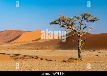 Sanddünen von Sossusvlei, Namib-Naukluft-Nationalpark, Sesriem, Namibia - Stockfoto