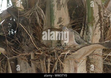 Vogel Pflege und Fütterung baby Vögel. - Stockfoto