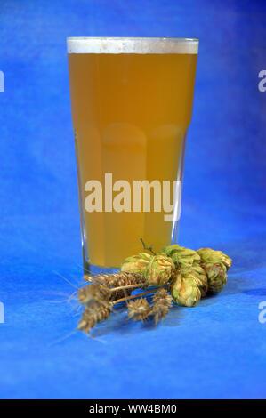 Glas Weizen Bier mit Schaum und Ohren von Hopfen auf einem blauen Hintergrund. Close-up. - Stockfoto