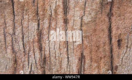 Nahaufnahme von Baumstamm Textur - Stockfoto